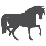 Szablon do malowania Koń S12