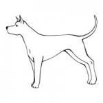 Naklejka ozdobna Pies M31