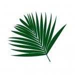 Szablon malarski Liść palmy S18