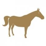 Naklejka Koń M22